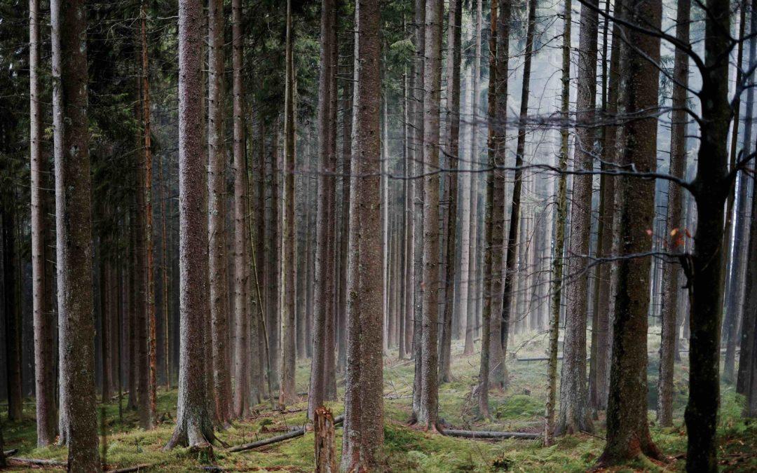 Katastrophen-Monat Juli Biomasse trifft es am härtesten